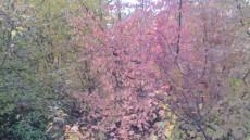 Боите на есента го освојуваат Крушино