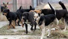 Кучиња скитници тешко повредиле жена во Кичево