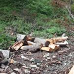Удар за шумската мафија, осомничено едно лице од Кичево